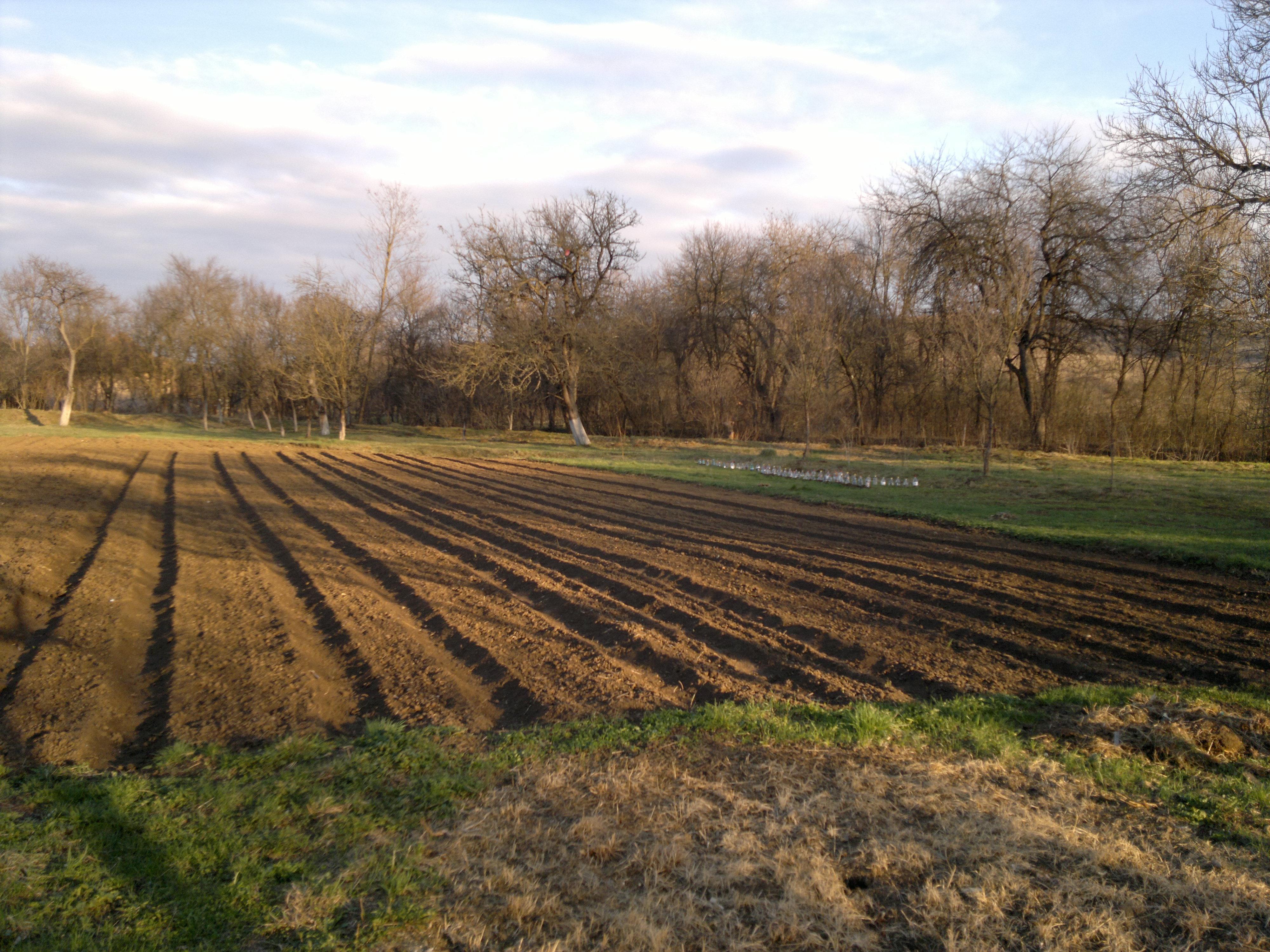 Gradina mare de legume