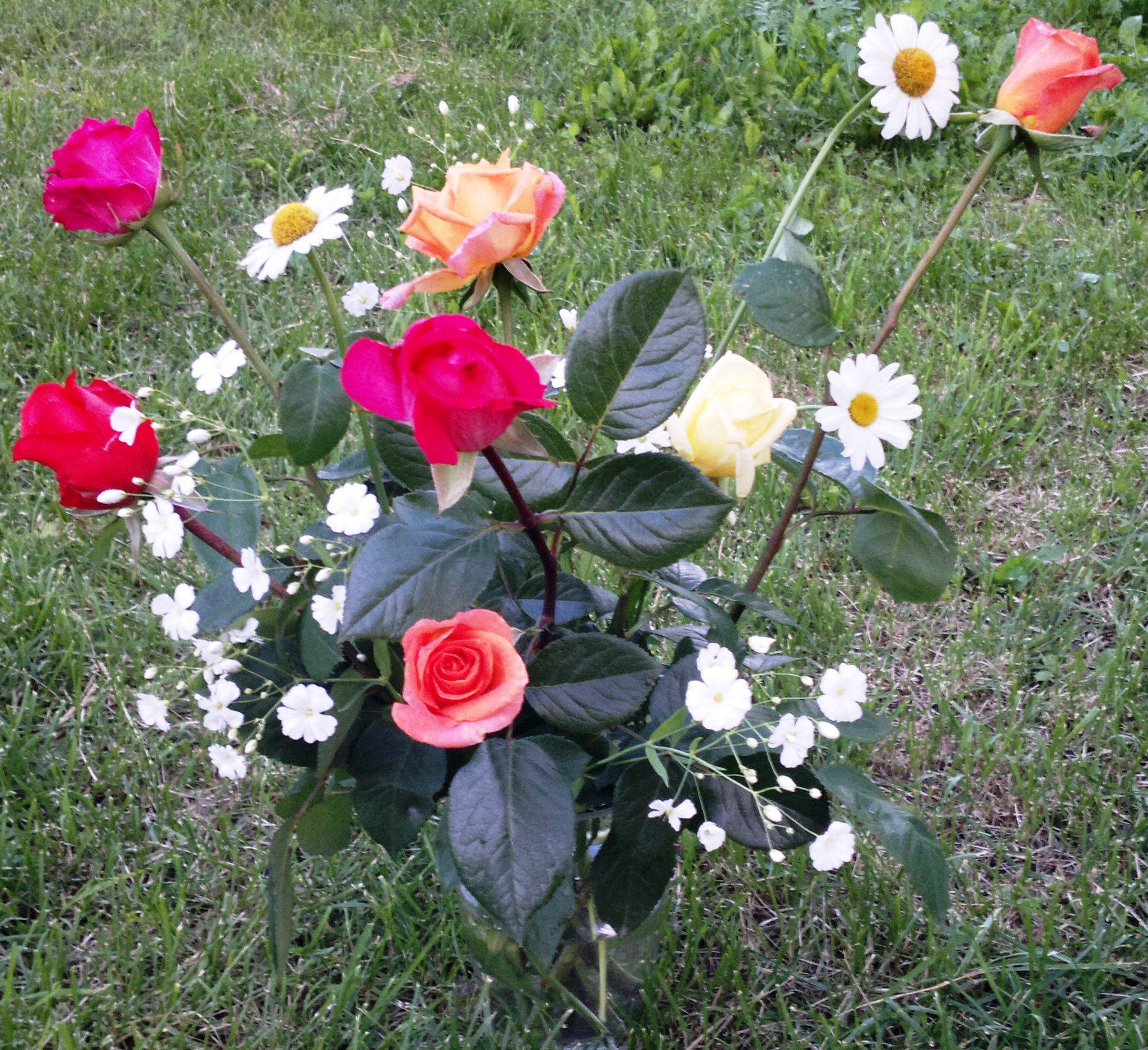 primul buchet de trandafiri 2012