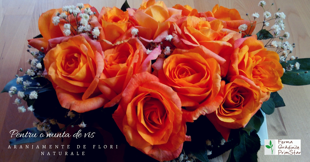 Aranjamente Florale Pentru Evenimente Ferma Grădinile Primstar